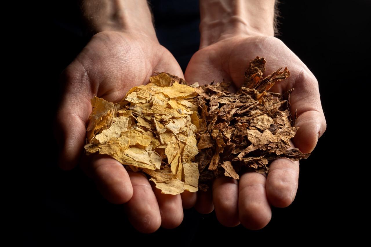 The tobacco leaf